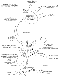 prevention of post harvest food losses fruits vegetables and root