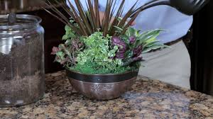the best indoor plants imax landscape