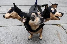 Halloween Costumes Dachshunds 25 Unbelievable Halloween Costumes Dogs