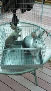 Homemade Rabbit Cage 444 Best Rabbits Images On Pinterest Raising Rabbits Meat
