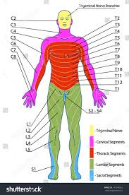 Dermatomes Map Images Of Dermatomes Of Leg Watch Out There U0027s A Clothes About
