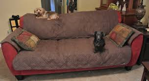 Surefit Sofa Covers by Sure Fit Pet Cover U2014 The Canine Chef Cookbook