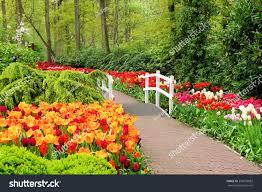 walkway through spring flowers keukenhof gardens stock photo