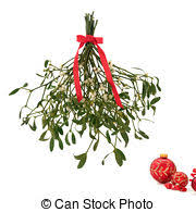 where to buy mistletoe mistletoe stock photo images 168 new images added for april 2018
