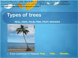 classifying numbers types of trees real palm pine fruit