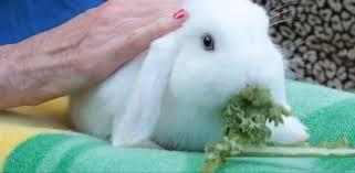 pros u0026 cons of having a pet rabbit small pets youtube