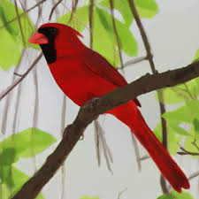 cardinal bird images public domain pictures page 1