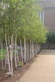 sktchbk prjct tate modern trees