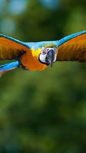 Parrot Decorations Home Best 25 Parrot Flying Ideas On Pinterest