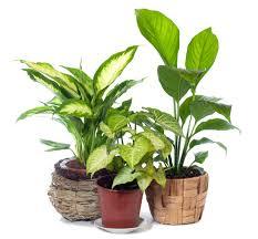 funeral plants flower specials in visalia ca