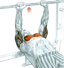 Muscles Used When Bench Pressing Today I Could Have Used A Spotter The Old Man U0027s Gym