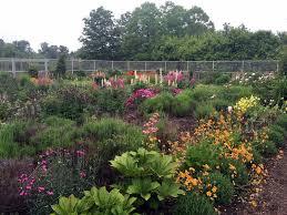 June Flowers - early june flowers in my garden the martha stewart blog