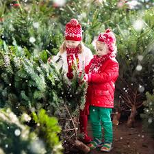 Pacific Northwest Christmas Tree Association - https www familyhandyman com wp content uploads