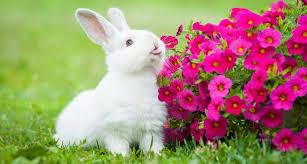rabbit rabbit top rabbit cages for sale reviews 2018 rabbit supplies