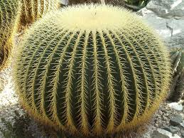 Seeking Cactus Cast 12 Best Succulents And Cactus Images On Succulents