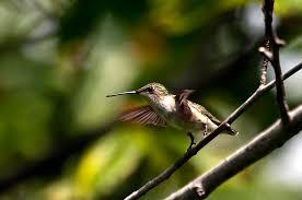 northern virginia birds stephen l tabone nature photography