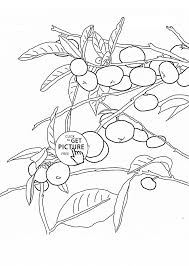 coloring pages orange tree kids drawing and coloring pages