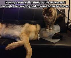Dog At Vet Meme - having a cone collar fitted at the vet was bad enough weknowmemes