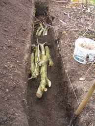 allotment garden growing medium compost or just plain soil