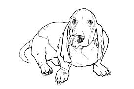 basset hound dog illustrations creative market
