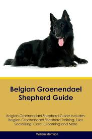belgian sheepdog gifts belgian groenendael shepherd guide belgian groenendael shepherd