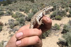 Seeking Season 1 Episode 1 Lizard Nevada Studies Changes To Reptile Collection Las Vegas