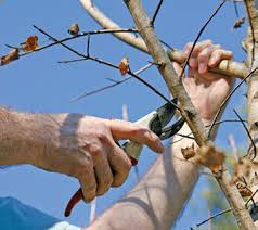 yard and garden properly pruning trees during winter months