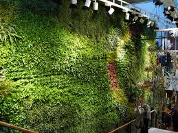 habitat horticulture completes largest indoor living wall in