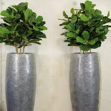 office plants great pot u0026 tropical plants for your offices