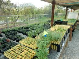 Native Plant Nursery Los Angeles Ca Los Nogales Nursery Audubon Center At Debs Park