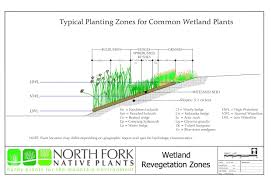 nebraska native plants north fork native plants hardy plants for the mountain environment