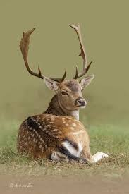 best 25 deer family ideas on animals with antlers