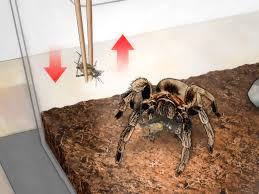 how to feed a tarantula 12 steps with pictures wikihow