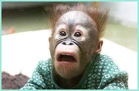 Shock Meme - meme creator ape in shock meme generator at memecreator org