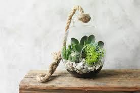 sheridan lewis hanging terrarium