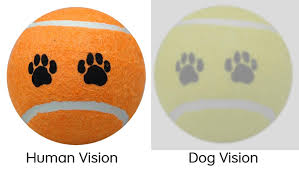What Color Is An Orange If Dogs Could Make Memes Adviceanimals
