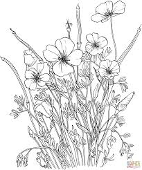 red poppy coloring page kids drawing and coloring pages marisa