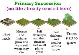 life sciences ecological succession oh gosh my grades
