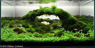 japanese aquascape aquascaping categories my own take on it aquascaping world forum