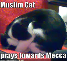 Muslim Cat prays towards Mecca. LoL by: wirgylovesamletoandshaya