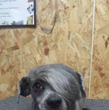 marty u0027s pet grooming home facebook