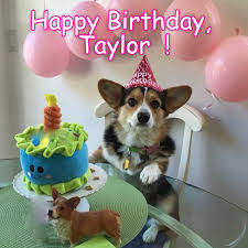 Birthday Animal Meme - i can has cheezburger happy birthday funny animals online