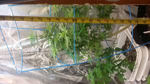 glamorous closet grow setup ventilation roselawnlutheran