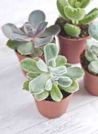 Best Plants For No Sunlight The Best Office Plants Plants That Will Thrive On Your Desk