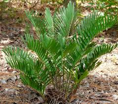 native plants of the midwest a comprehensive guide to the best florida native plants florida native plant society blog