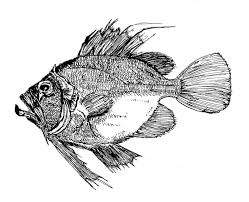 fish pen and ink by iggwilk on deviantart