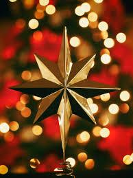 hanging christmas lights free images branch light blur abstract leaf flower petal