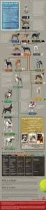 american pitbull terrier traits what is the difference between american bully and american pit