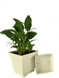 easy growing best indoor houseplants for india
