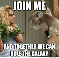 High Koala Meme - koala meme weknowmemes